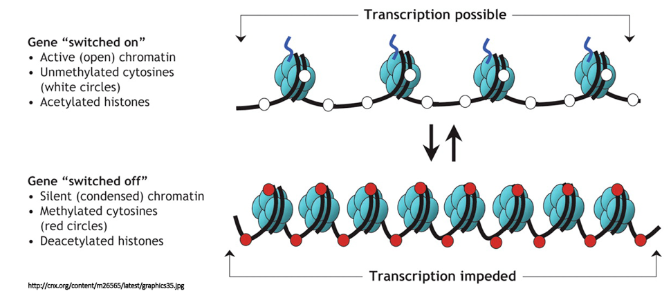 Figure 2: Epigenetic Modifications to DNA and Histones