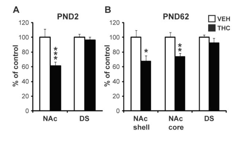 Figure 5: DRD2 mRNA levels in rats exposed to THC in utero on pre-natal day 2 (A) and pre-natal day 62 (B)